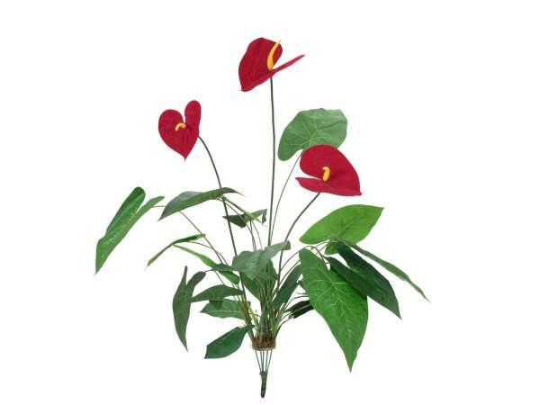 EUROPALMS Anthurium, künstlich, 70cm